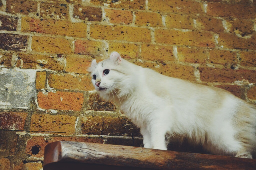 London Cat village